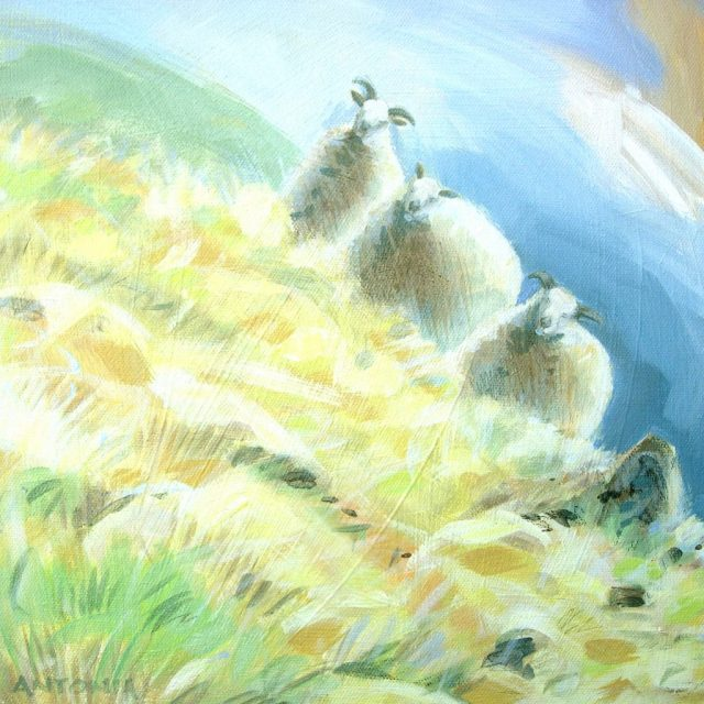 three steep sheep