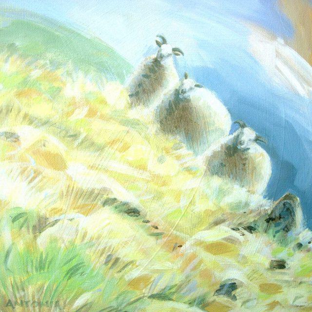 three steep sheep