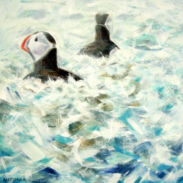 puffin pair dancing ledge