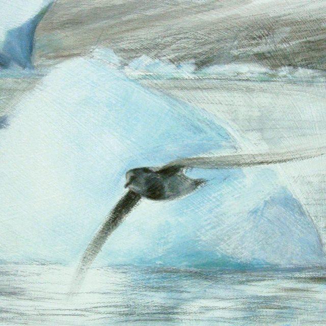 young fulmar at glacier edge
