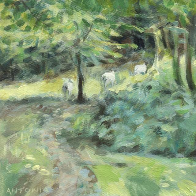 dartmoor - in hisley wood