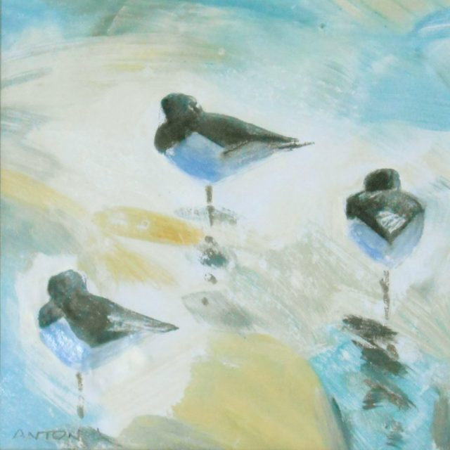 Oystercatcher Trio